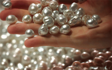 Australian South Sea pearls have recently been certified sustainable. Image courtesy: Paspaley