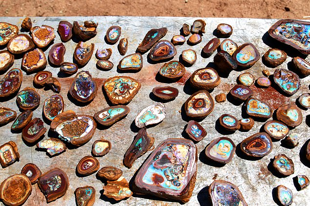 Part of the Andreous' opal find, including rare Yowah nuts and Koroit matrix opal. Image credit: Daily Mail