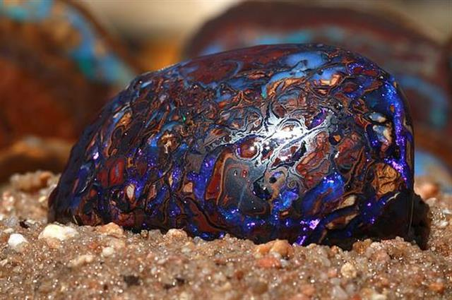 A rare Koroit matrix opal, found by the Andreous