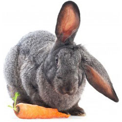 This bunny knows what's up with his carrots...