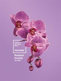 The Colour of the Year is said to inspire confidence and provide joy, love and health