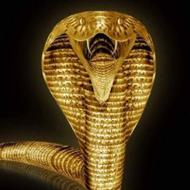 So how about a gold cobra?