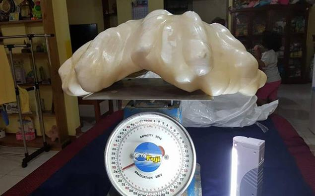 "The pearl reportedly weighs 34 kg and measures roughly 61 cm by 30 cm. Image courtesy: <a href=""http://bit.ly/2blLPkD"" target=""_blank"">Facebook/City Government of Puerto Princesa</a>"